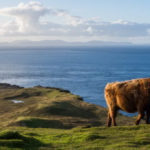 Top 5 Best Things to Do In Scotland