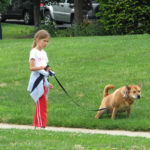 5 Great Ways to Spend a Day Out With Your Canine Companion